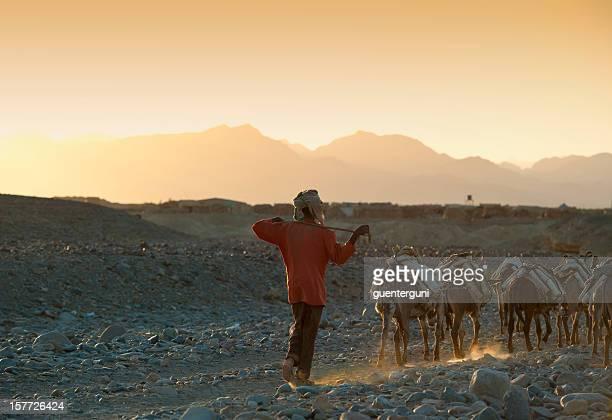 One of the last salt caravans, Danakil Desert, Ethiopia