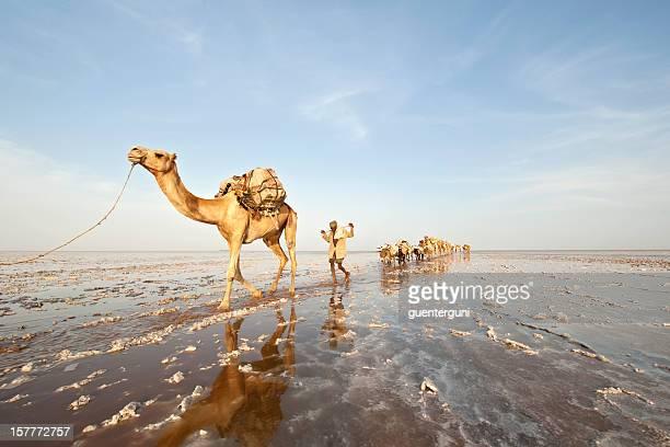 Einer der letzten salt Wohnwägen, Danakil Wüste, Äthiopien