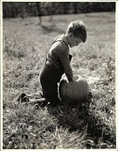 One of the necessary traditions for Halloween is the carving of a jackolantern This boy is getting started by cleaning out the inside of this perfect...