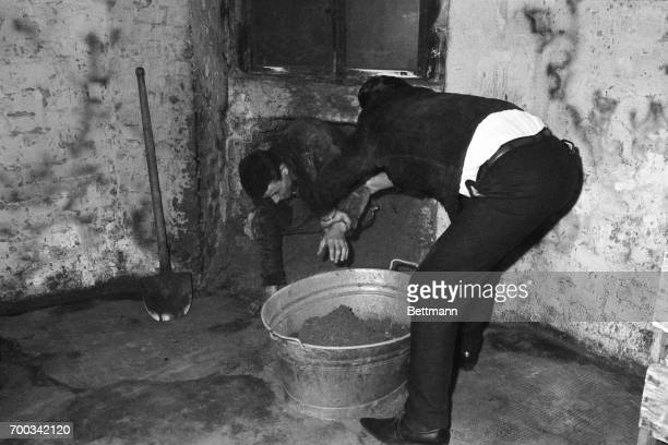 One of the six West Berliners who dug a 20inchwide tunnel under a border street to East Berlin crawls out after his two hour scooping shirt sometime...