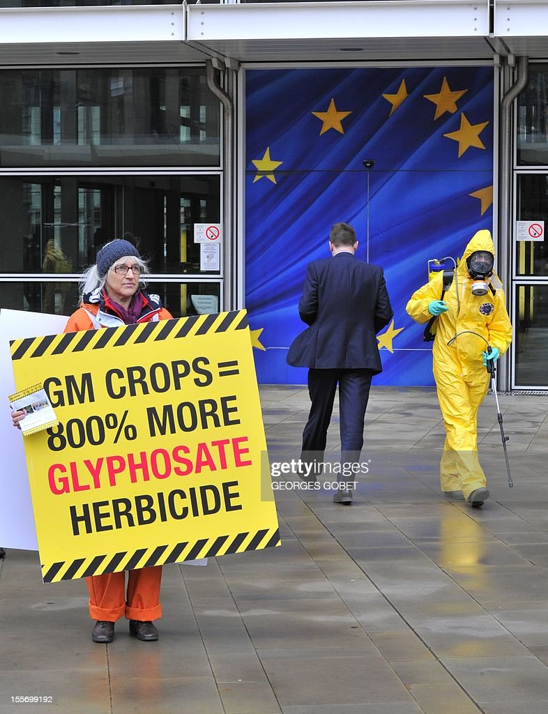 """One of the twenty seven activists, one for each EU member state, display a banner reading """"toxic warning"""" outside the Commission headquarters on November 7, 2012 at the EU headquarters in Brussels as the EU Commission is considering authorising the cultivation of 26 new genetically modified crops, 19 of which are genetically modified to be tolerant to herbicides – mostly glyphosate, the active ingredient in many herbicides sold throughout the world."""