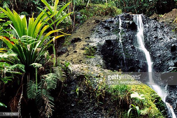 One of the Waisila waterfalls between ferns and mosses ColoISuva Forest Park Viti Levu Island Fiji Islands