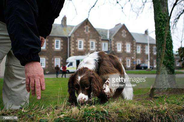 One of two Springer Spaniel's brought onto the island of Jersey in connection with The Haute de la Garenne where the remains of a child's body have...