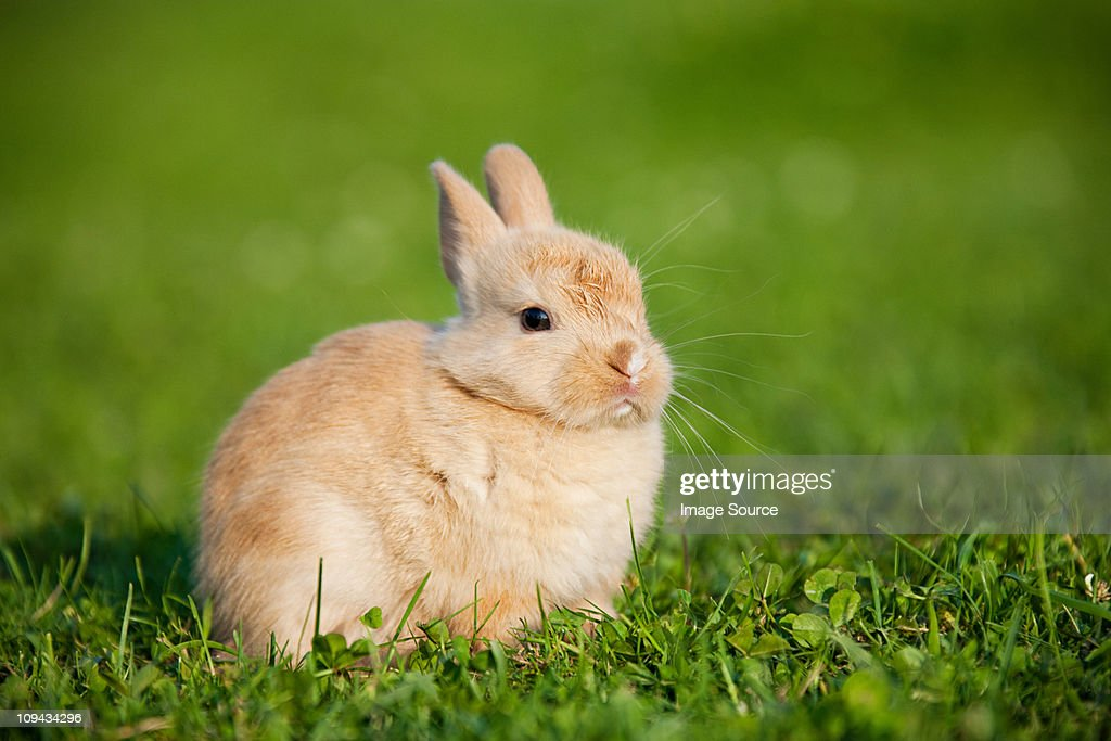 One rabbit sitting on grass : Stock Photo