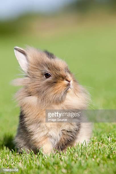 One rabbit sitting on grass