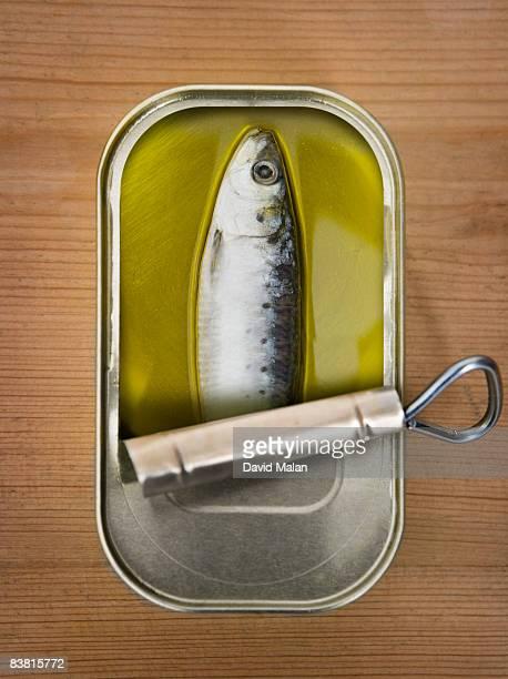 One sardine in a tin