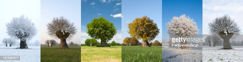 One tree in different seasons
