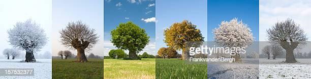 Uma árvore em diferentes épocas