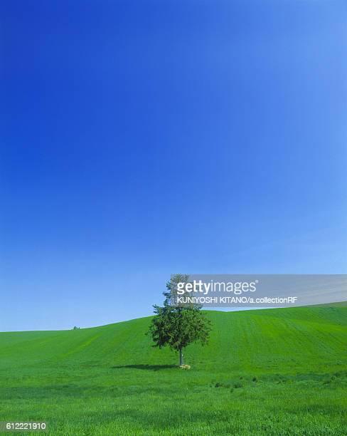 One tree in green field