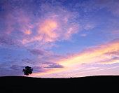 One tree on hill under romantic sky. Biei, Hokkaido, Japan