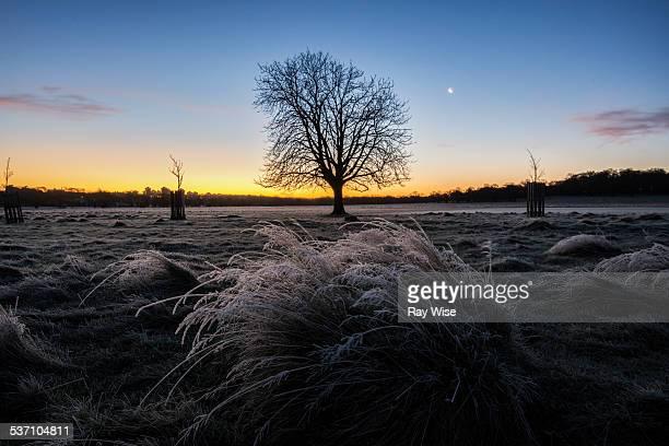 One tree sunrise
