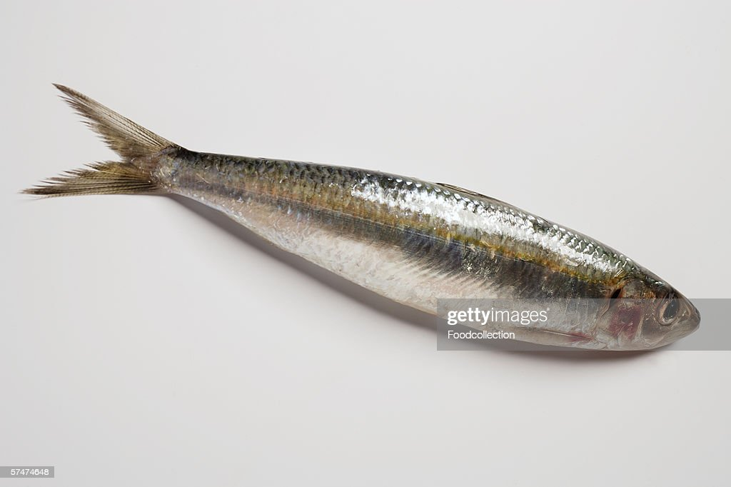 One whole sardine : Stock Photo