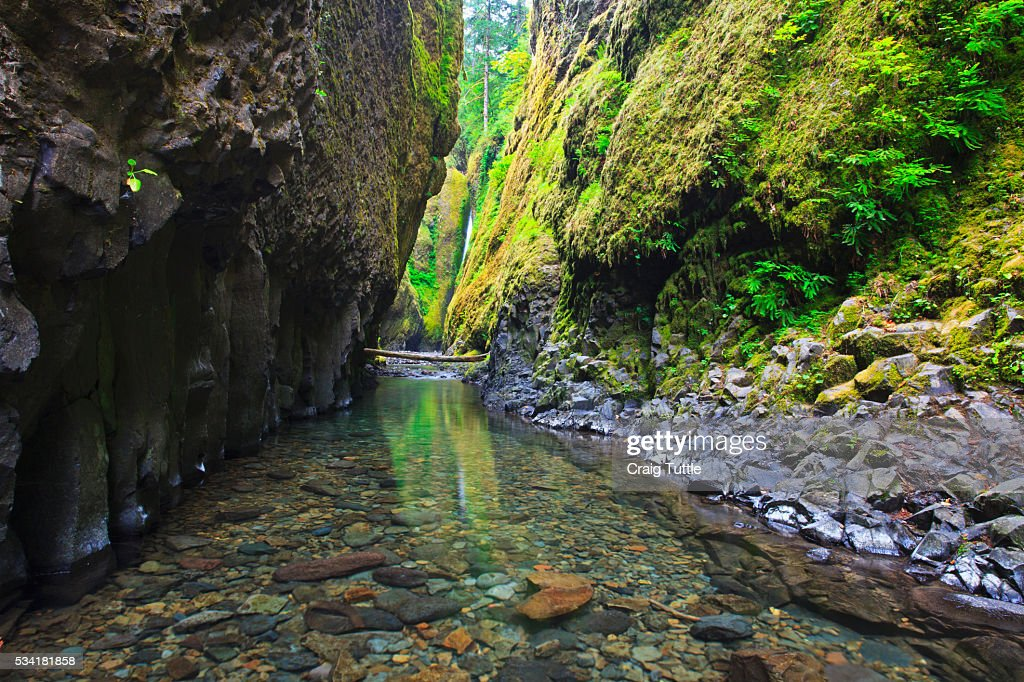 Oneonta creek in Oneonta Gorge, Columbia River National Scenic Area, Oregon