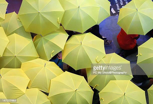 Only yellow umbrellas