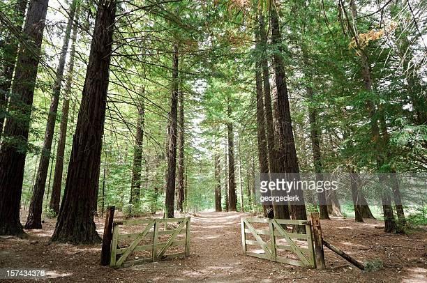 オープンをご利用いただけます。森林ウォーク