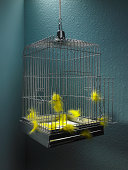 Open empty bird cage  with yellow feathers scattered inside.