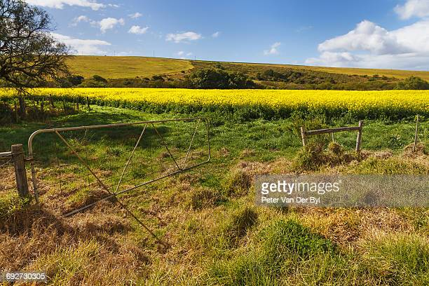 A open farm gate leading into the Canola field, Swellendam, Western Cape Province, South Africa