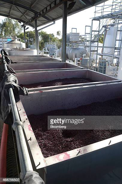 Open fermenting vats containing a combination of Shiraz and Pinot Noir grapes in an advanced stage of fermentation stand at the Rob Dolan Co winery...