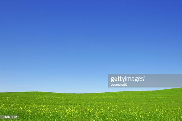 Open green fields and blue sky
