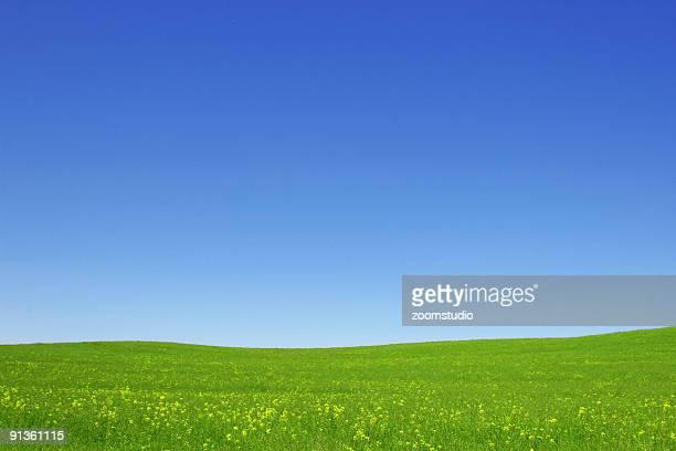 Offene grünen Rasen und blauer Himmel