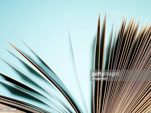 Open pages of a book on blue