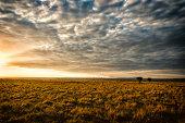 Open savannah grassland at sunset