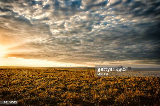 Open savannah grassland at sunset