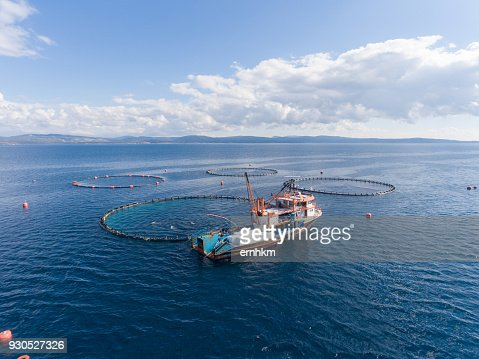 Open Sea Fish Farm : Stock Photo