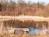 open summer day golden grass land nature reserve lake pond reeds pontoon; essex; england; uk