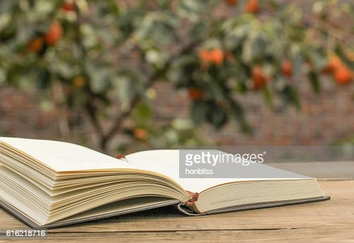 open the book in the nature : Stock Photo