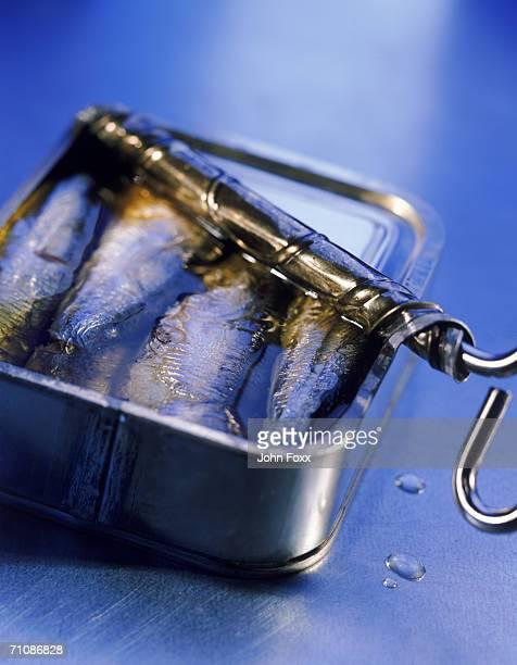 Open tin of sardines, close-up