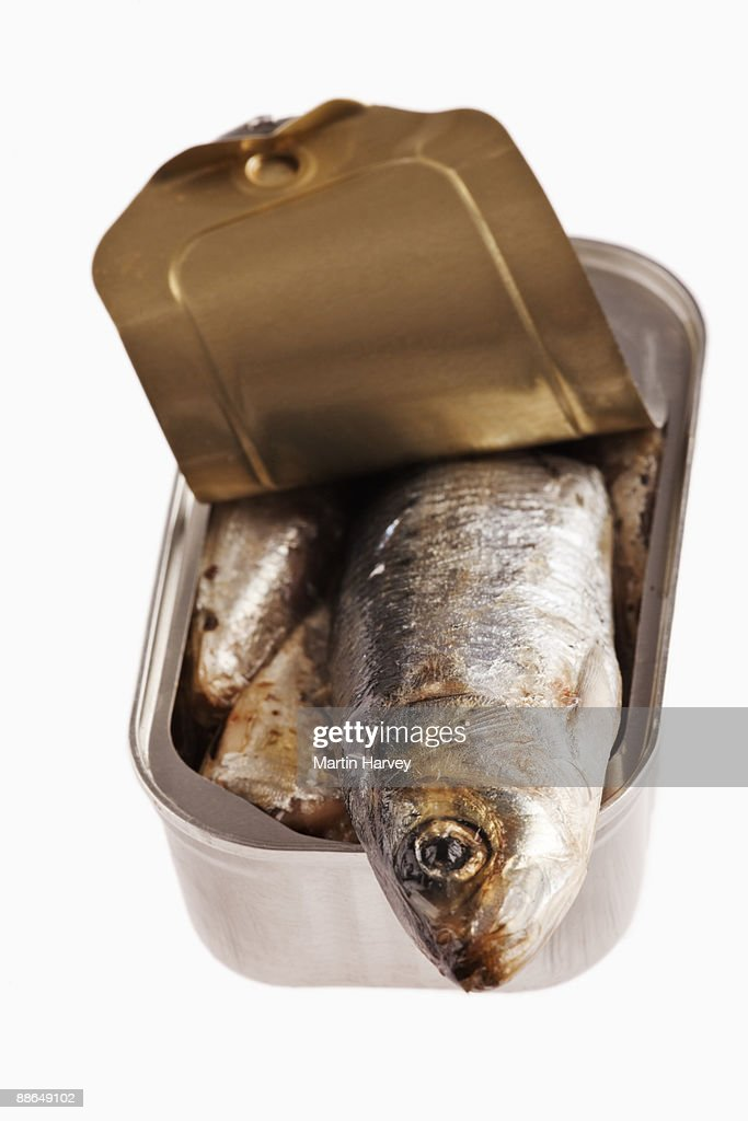 Opened sardine can against white background. : Stock Photo