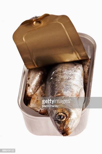 Opened sardine can against white background.