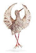 opera bird_02