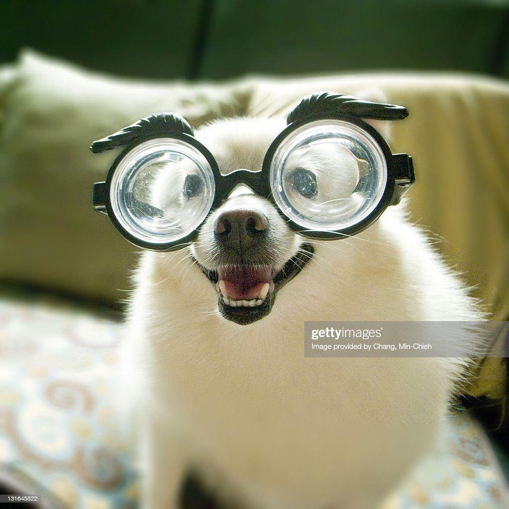 Dog with big glasses.
