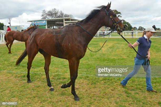 Orakei Overlord and strapper Shannon Metzger after winning the Weirâs IGA Donald Maiden Plate at Donald Racecourse on June 19 2017 in Donald Australia
