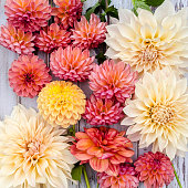 A collection of Dahlias on a rustic, white wood background.