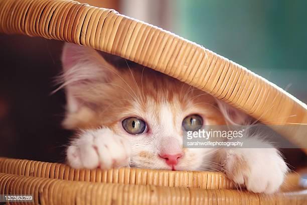 Orange and white kitten in basket