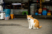 A little meow on the street