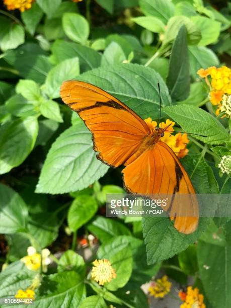 Orange butterfly on bright flower