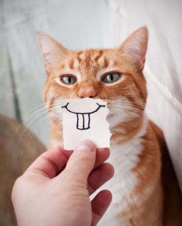 Orange Cat face