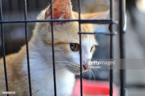 Orange Cat in The Cage