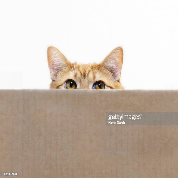 Orange cat peeping out from cardboard box