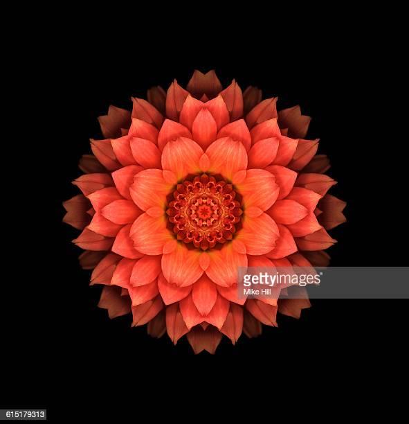 Orange Dahlia Mandala