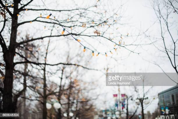 Orange decorating lights in trees