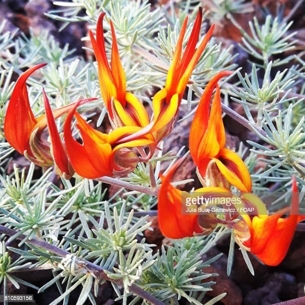 Orange flower on plant