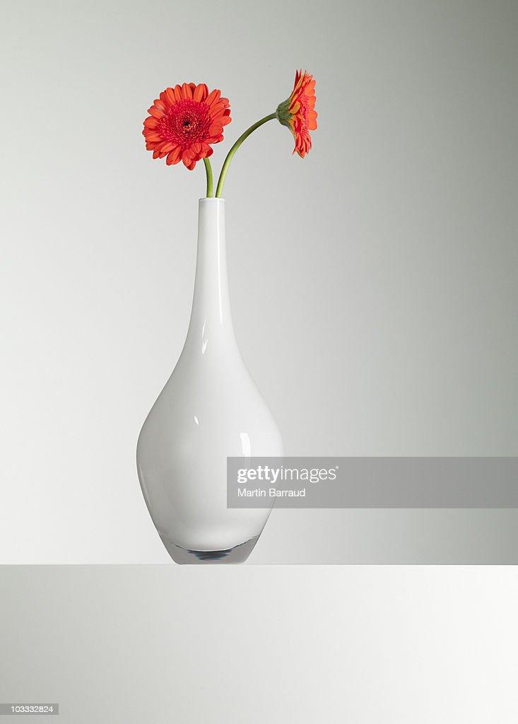 Orange gerbera daisies in vase : Stock Photo