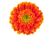 Orange gerbera flower isolated on white.