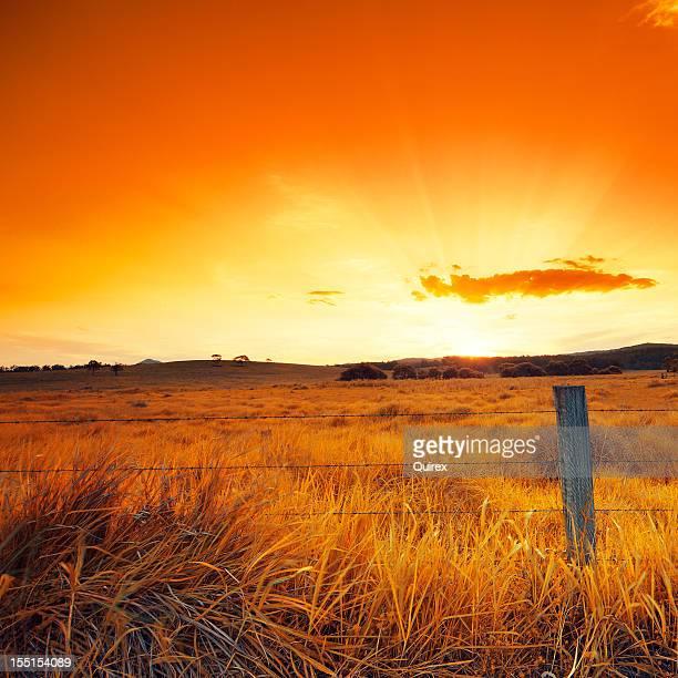 Orange Glowing Field