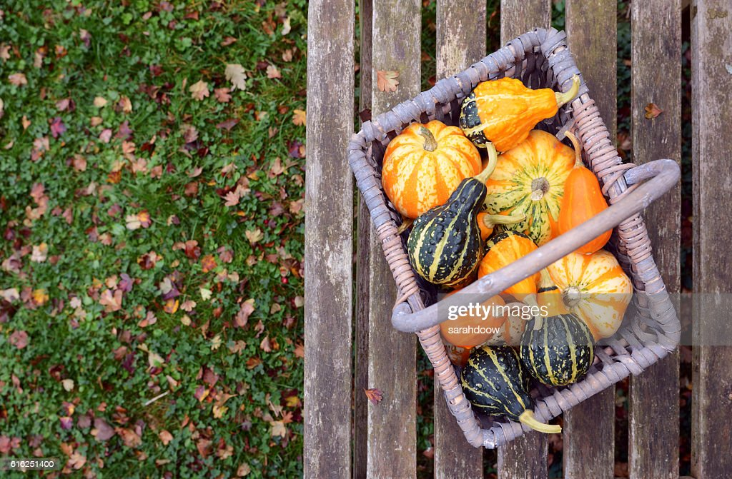 Orange, green and yellow ornamental gourds in a basket : Stock Photo